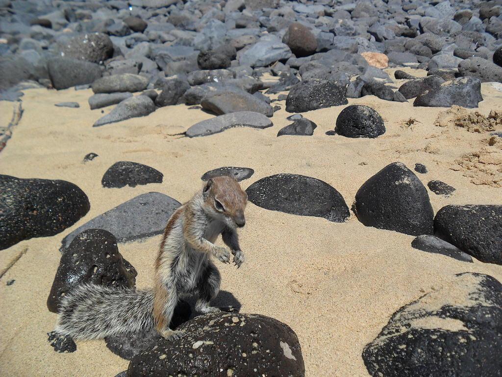 Канарские острова в марте. Fuerteventura_03