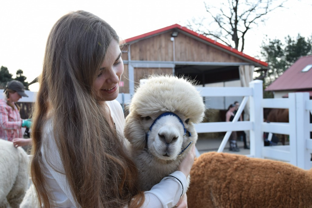 Ферма недалеко от Кракова или день с альпаками